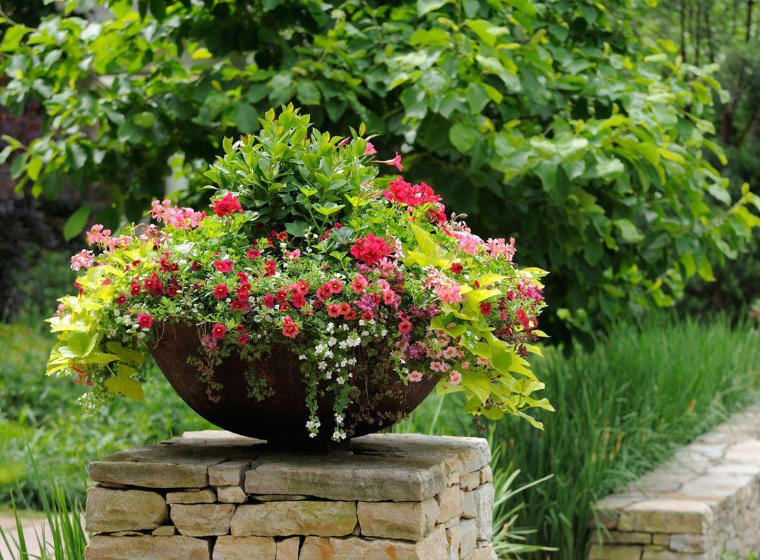 Красивые цветы в полукруглой чаше