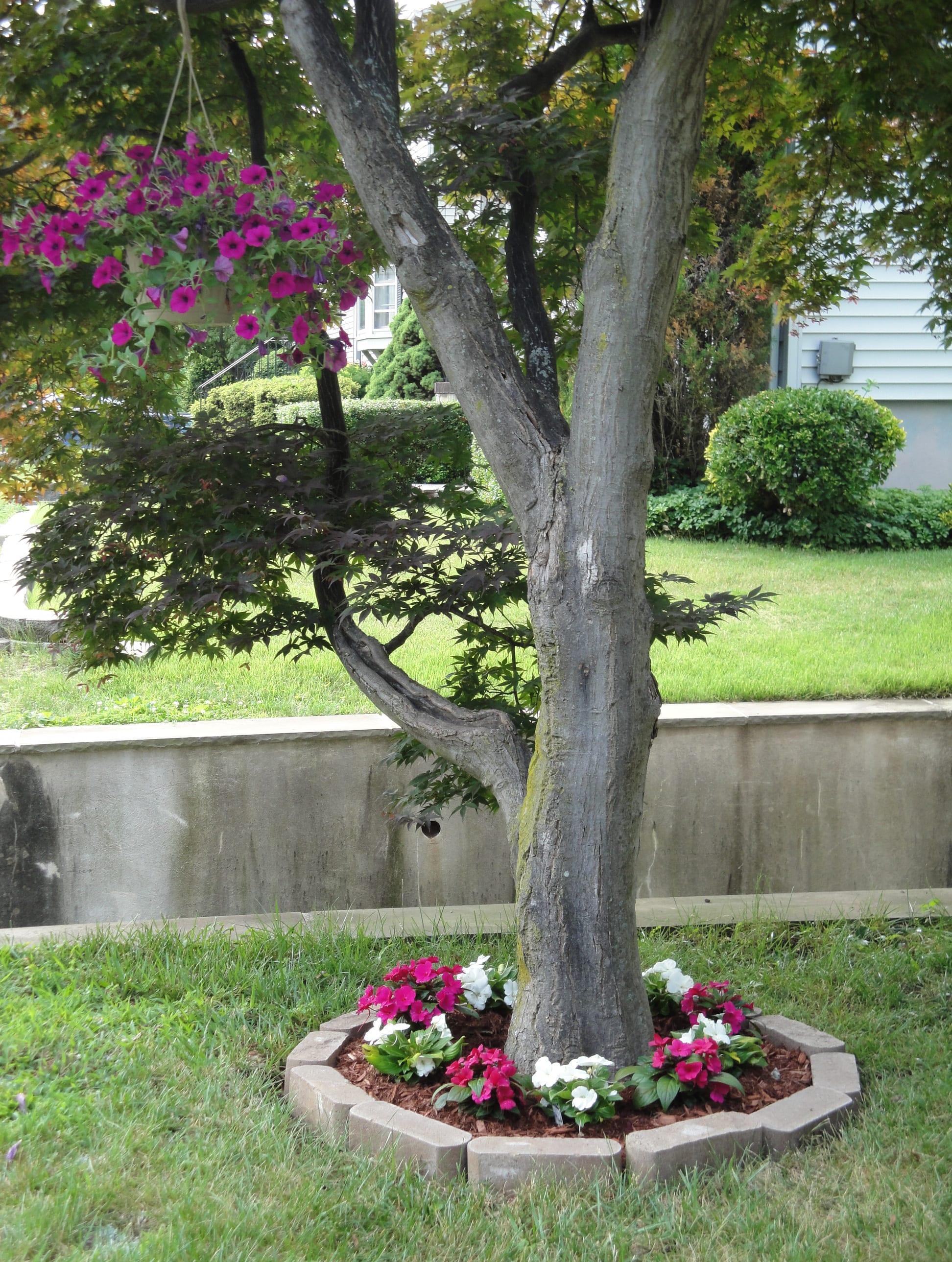 Красивая клумба вокруг дерева