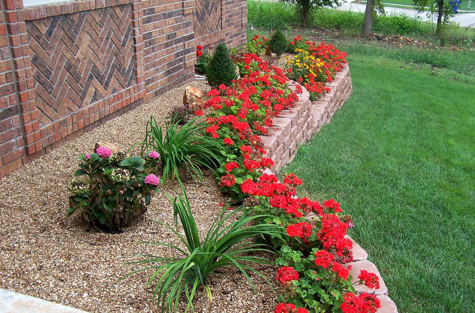Яркая красная клумба и другие цветы на даче