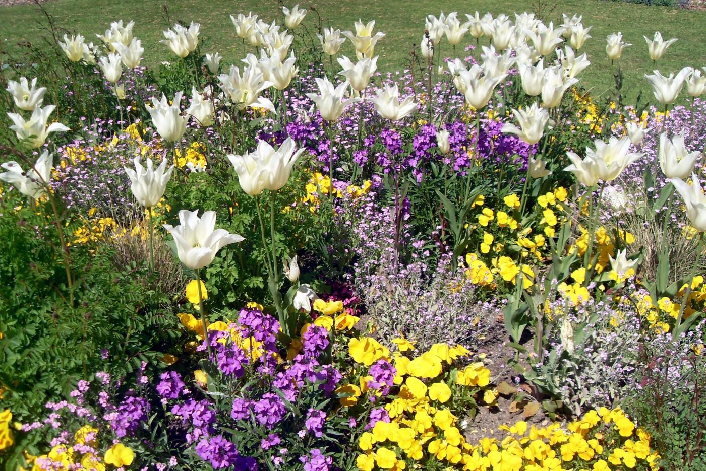 Клумба из однолетних цветов на даче