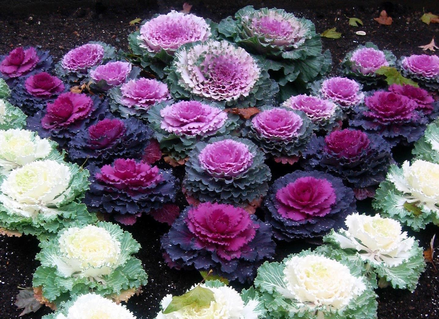 Растения в саду в стиле хай тек