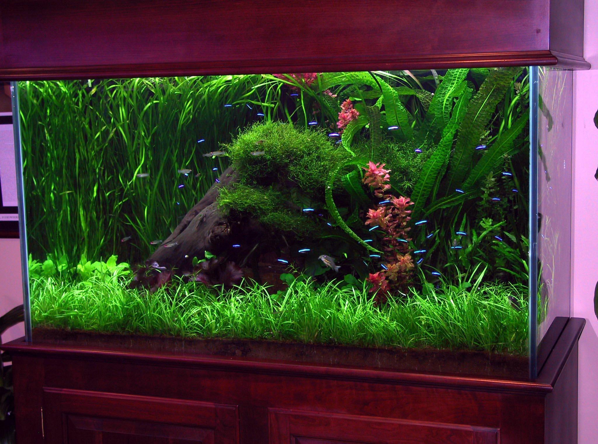 Декор для аквариума с растительностью