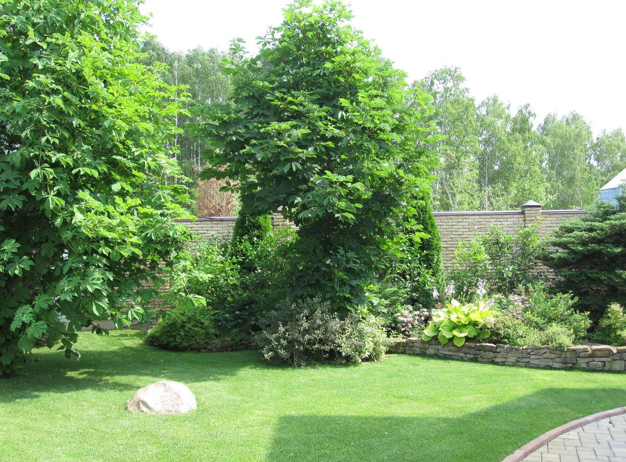 Красивое сочетание деревьев и кустов на участке