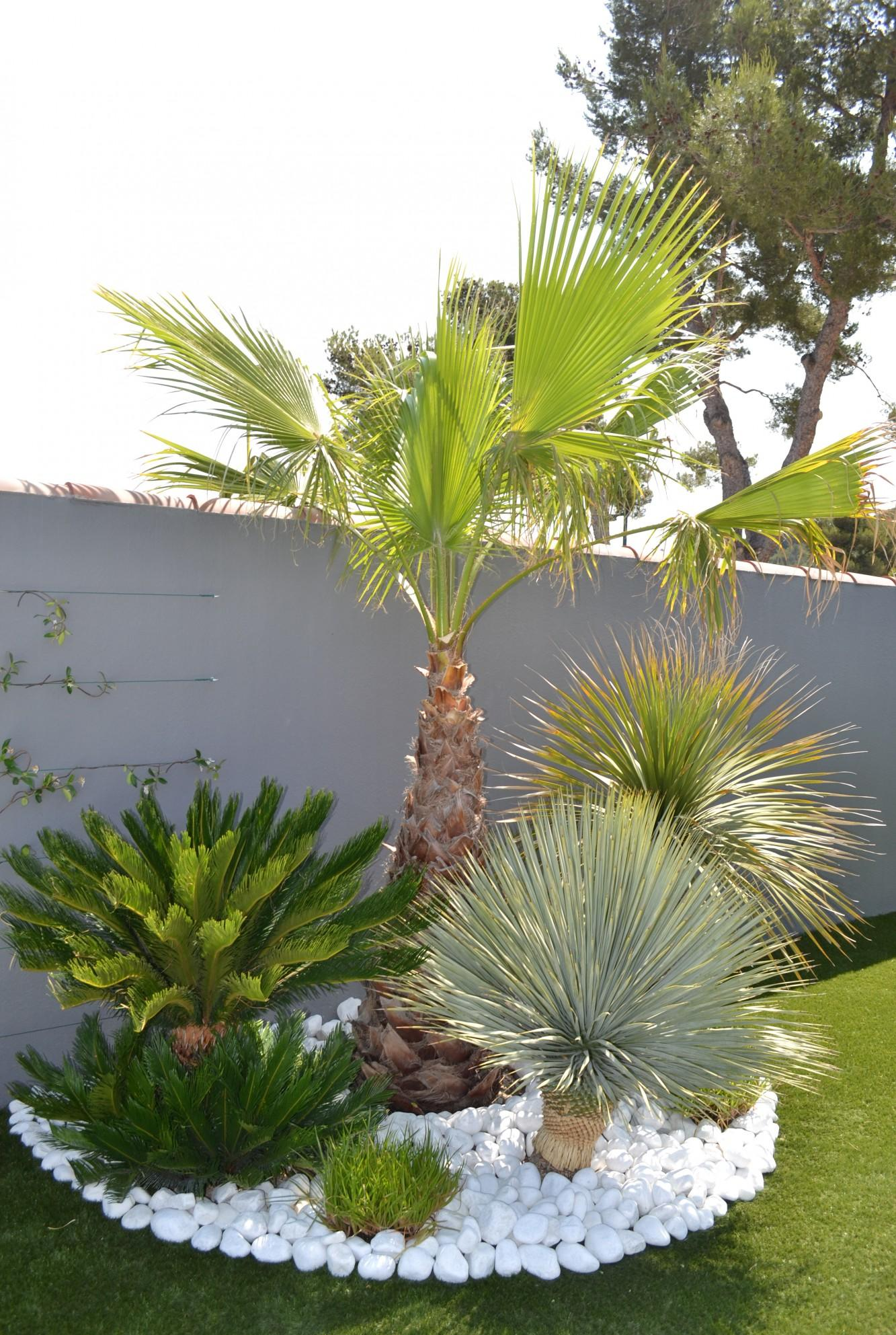Тропические декоративные кустарники
