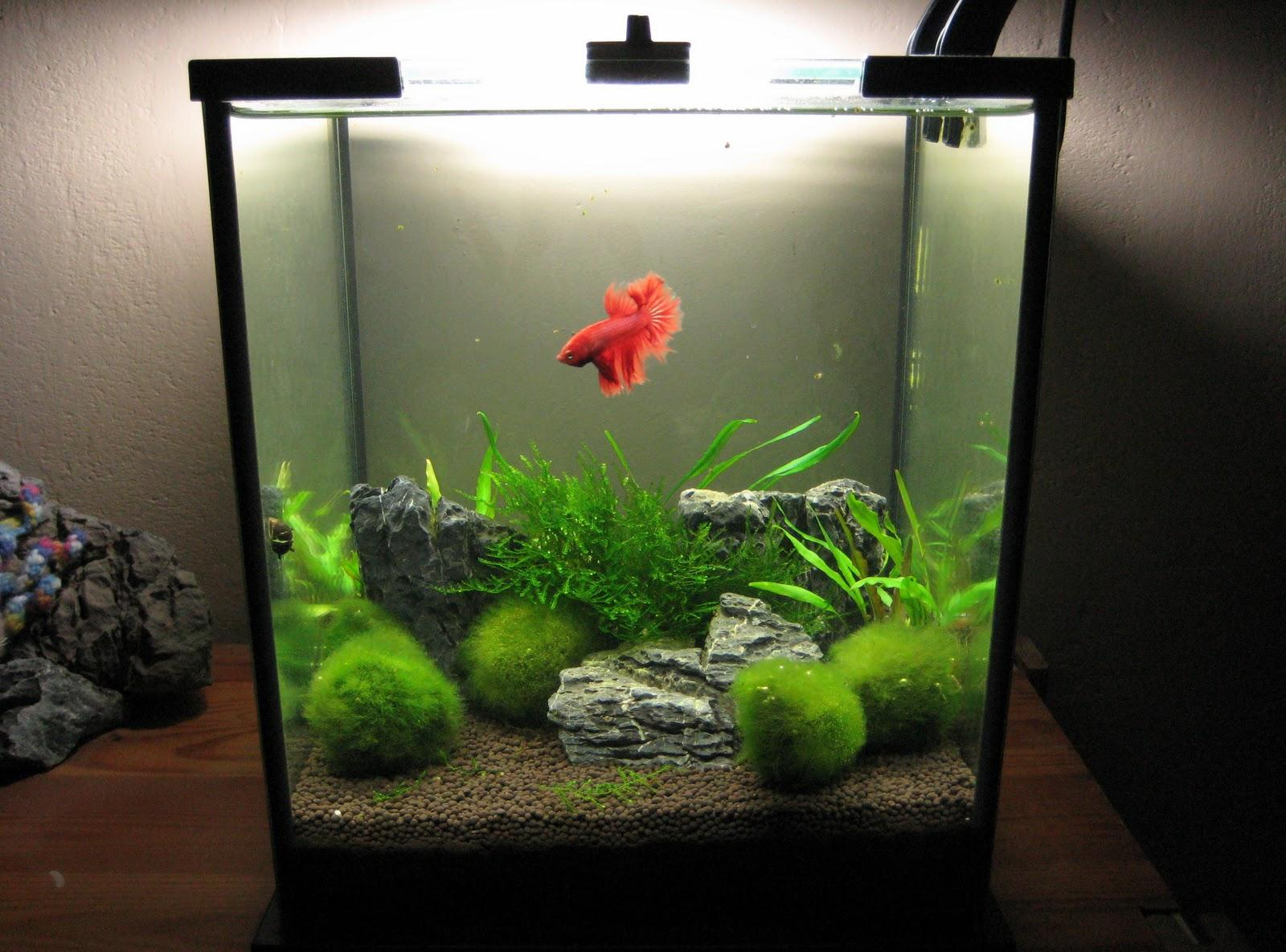 Декор для аквариума с водорослями