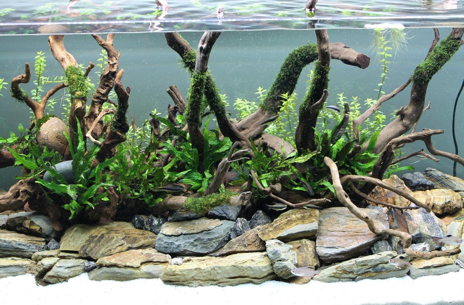 Декор аквариума ветками
