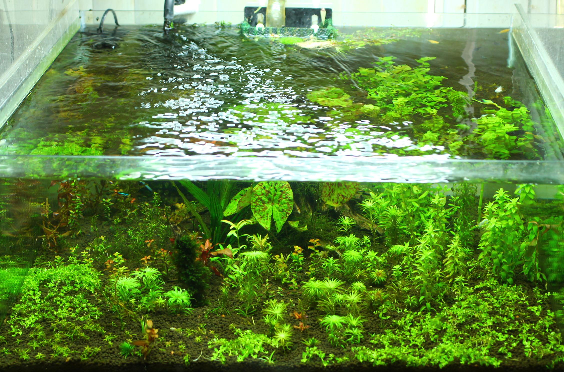 Декор аквариума растениями