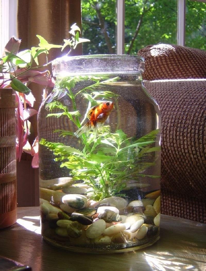 Декор для аквариума из банки