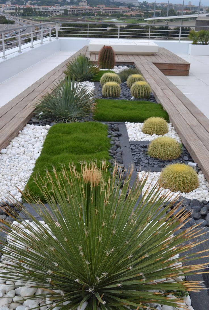 Декоративные кактусы в саду