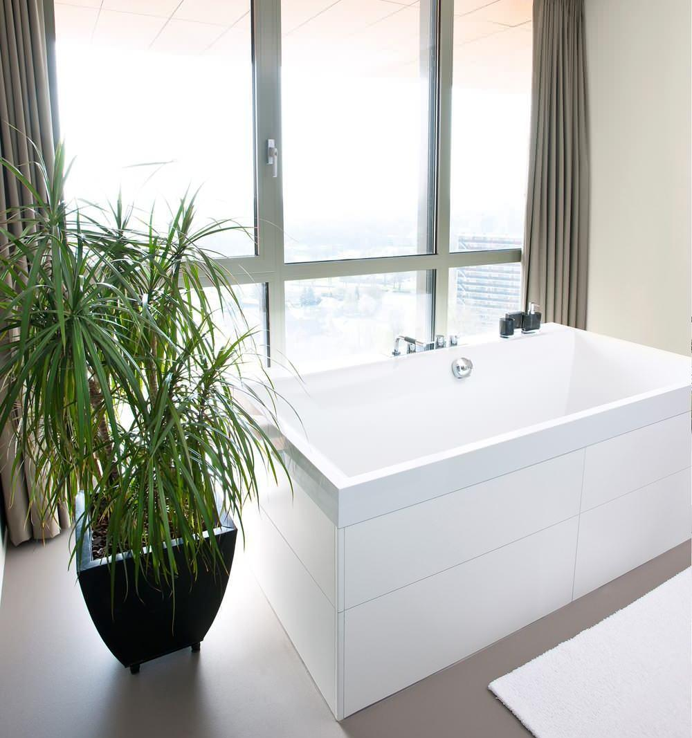 Драцена в ванной
