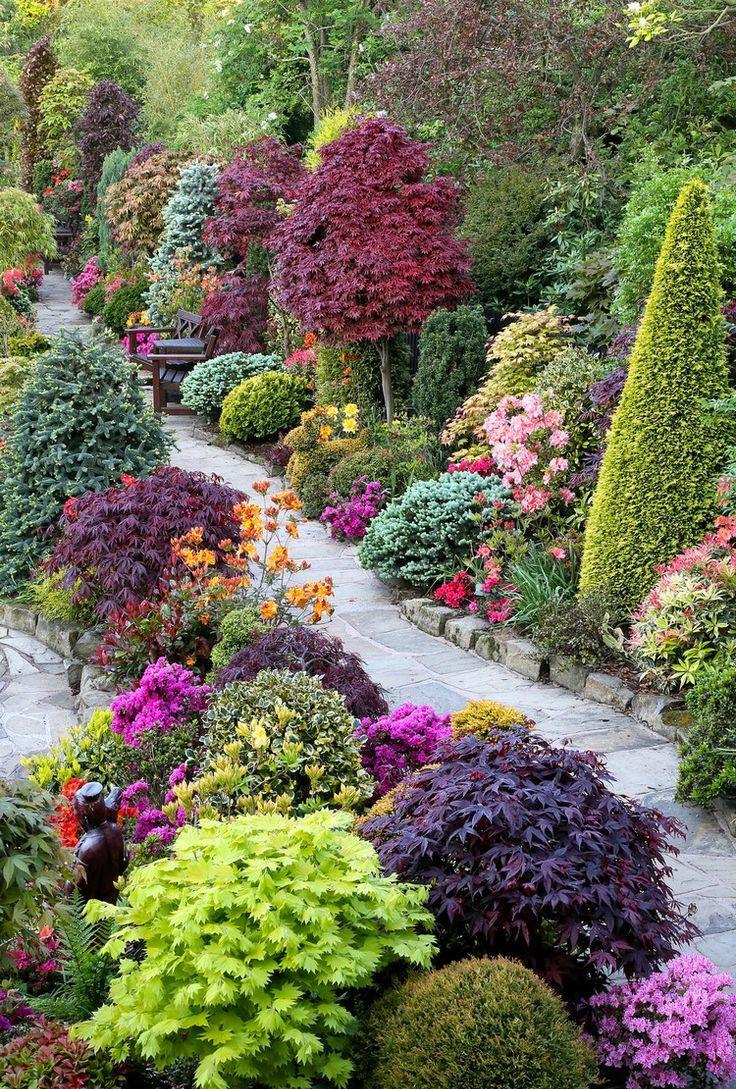 Декоративные кустарники в осеннем саду