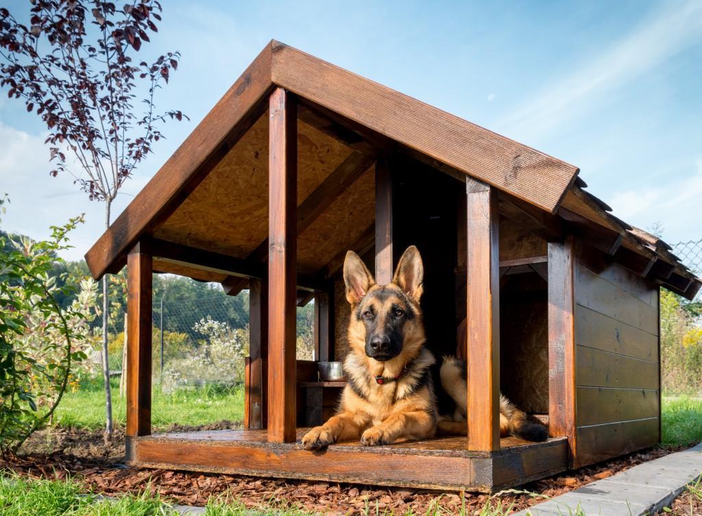 Будка для собаки большая