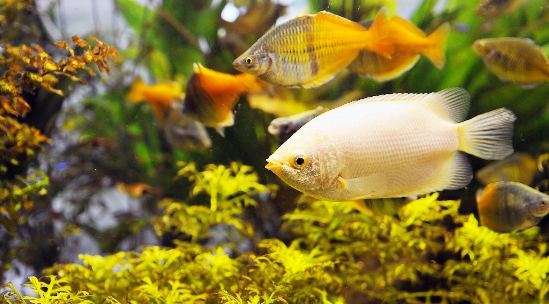 Декор для аквариума желтый