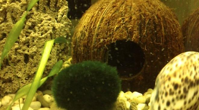 украшения для аквариума своими руками