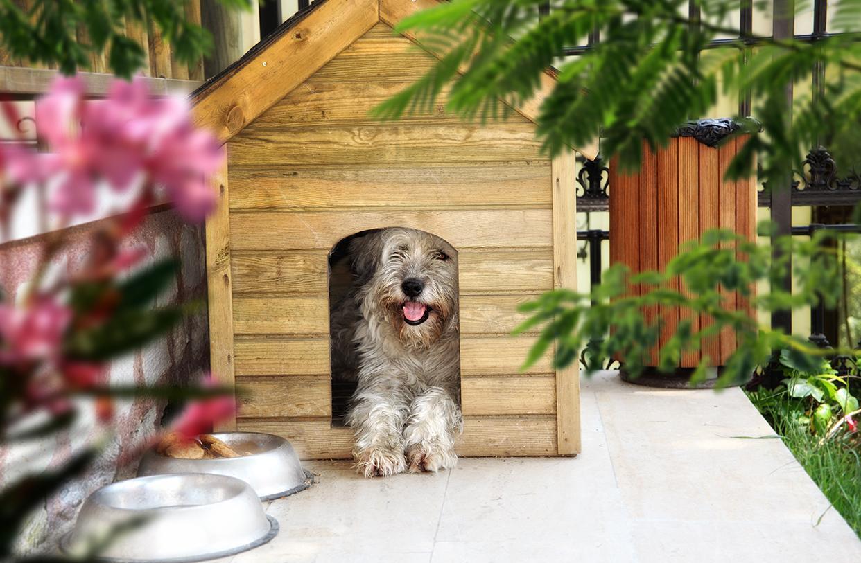 Будка для собаки деревянная