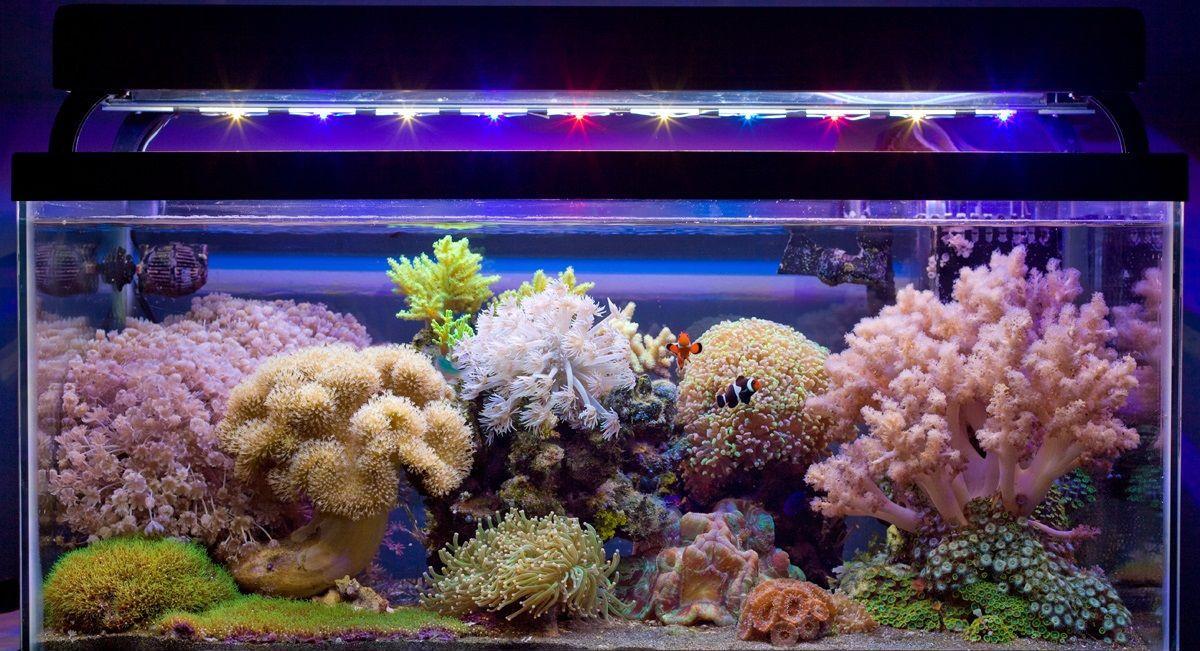 Декор морского аквариума