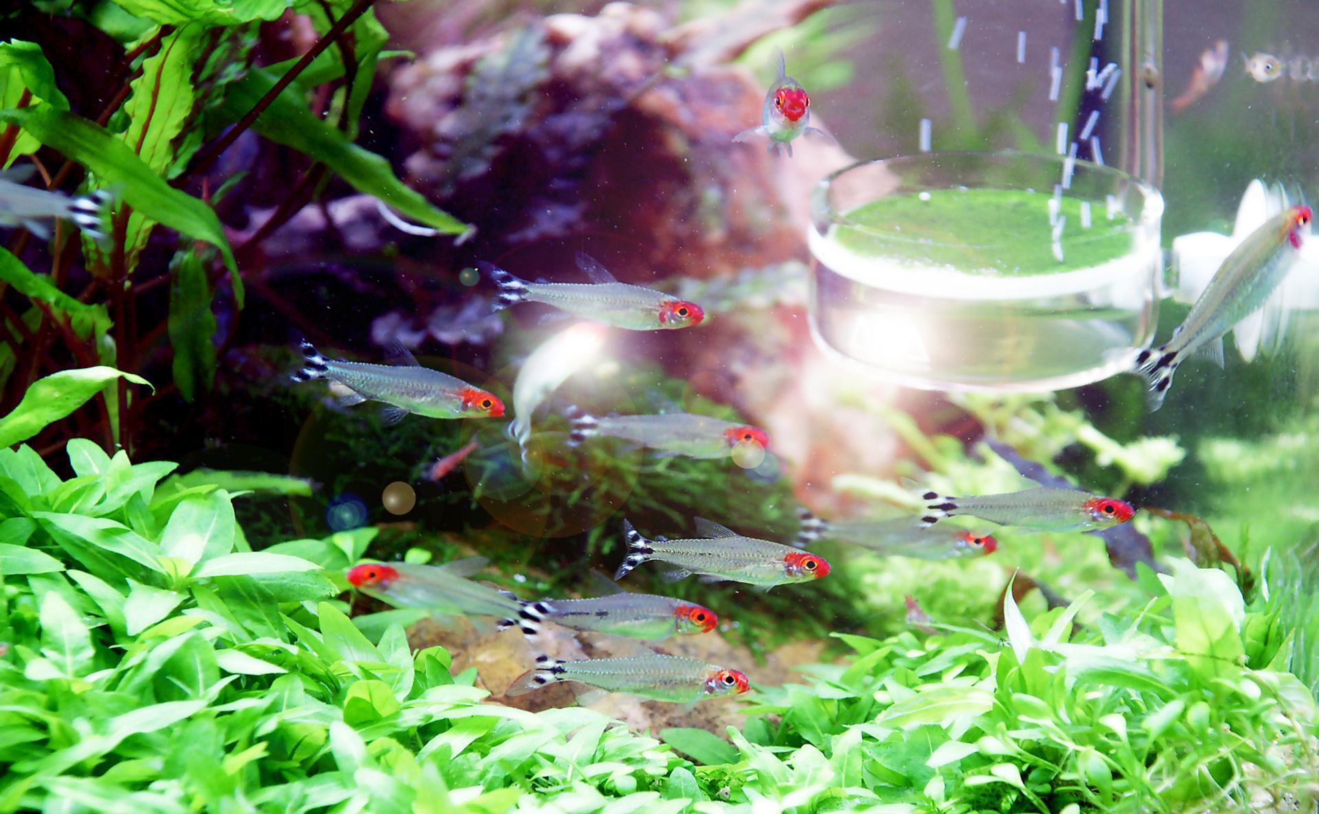 Декор для аквариума с маленькими рыбами