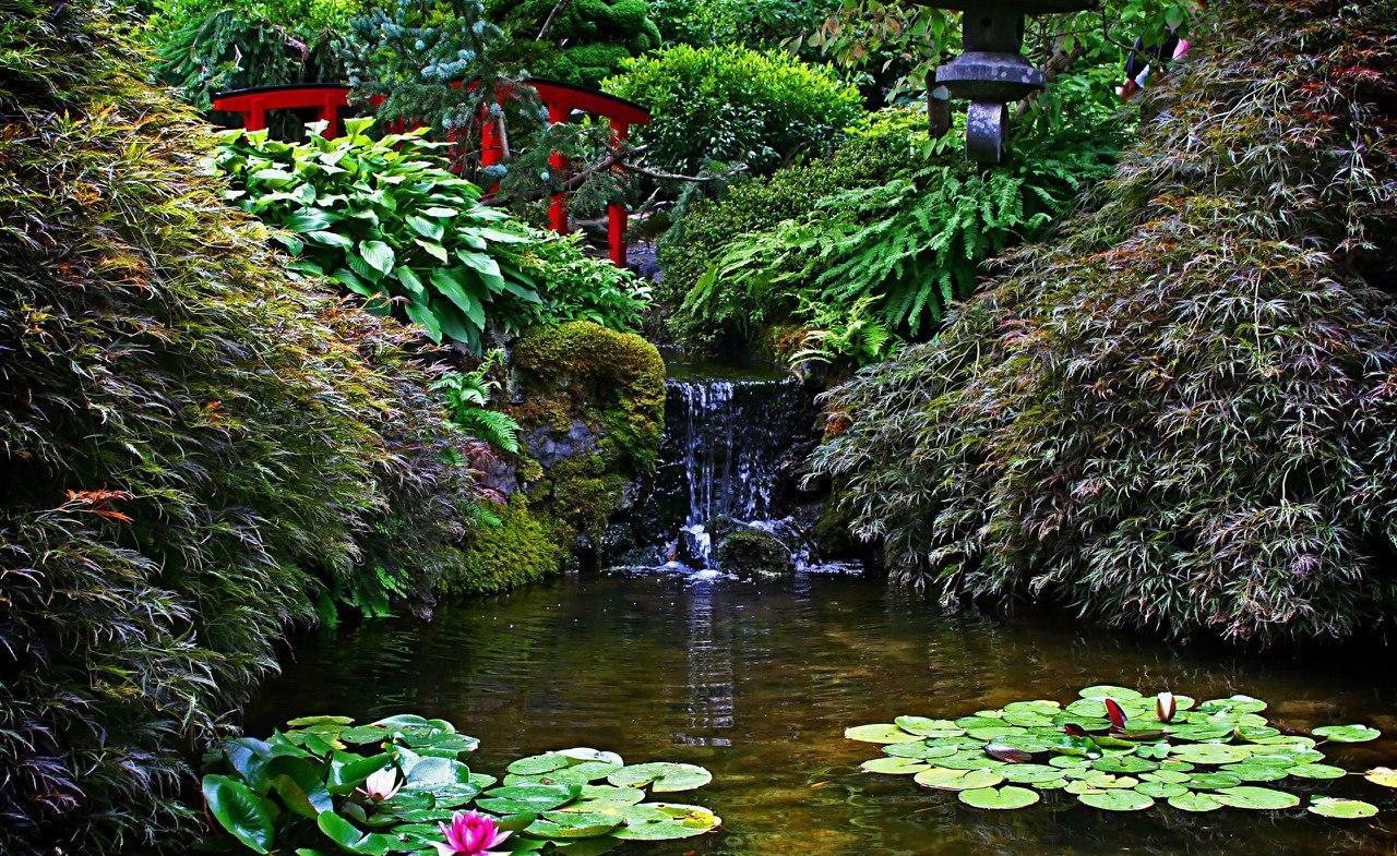 Пруд в китайском стиле с водяными клумбами