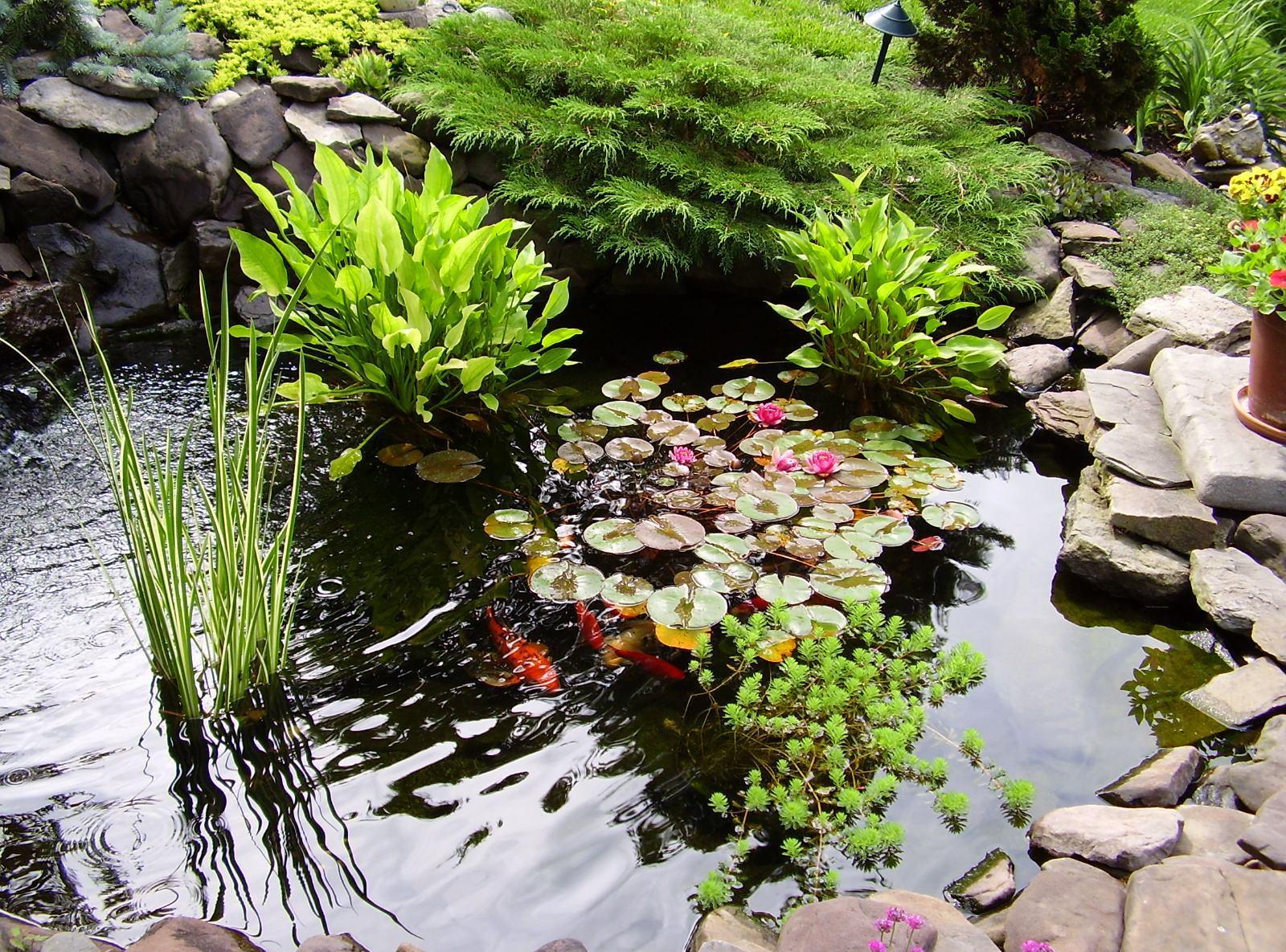 Оригинальные водяные клумбы в саду