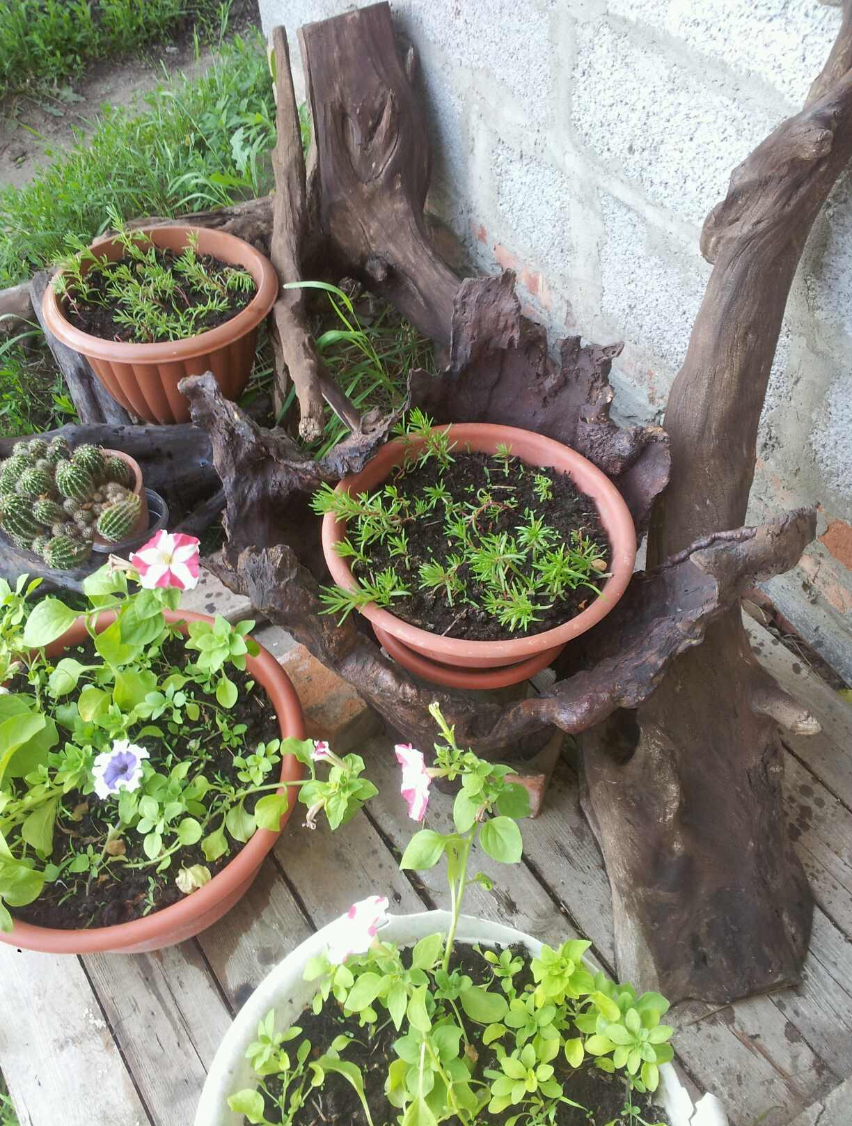 Коряги и цветочные горшки для украшения участка
