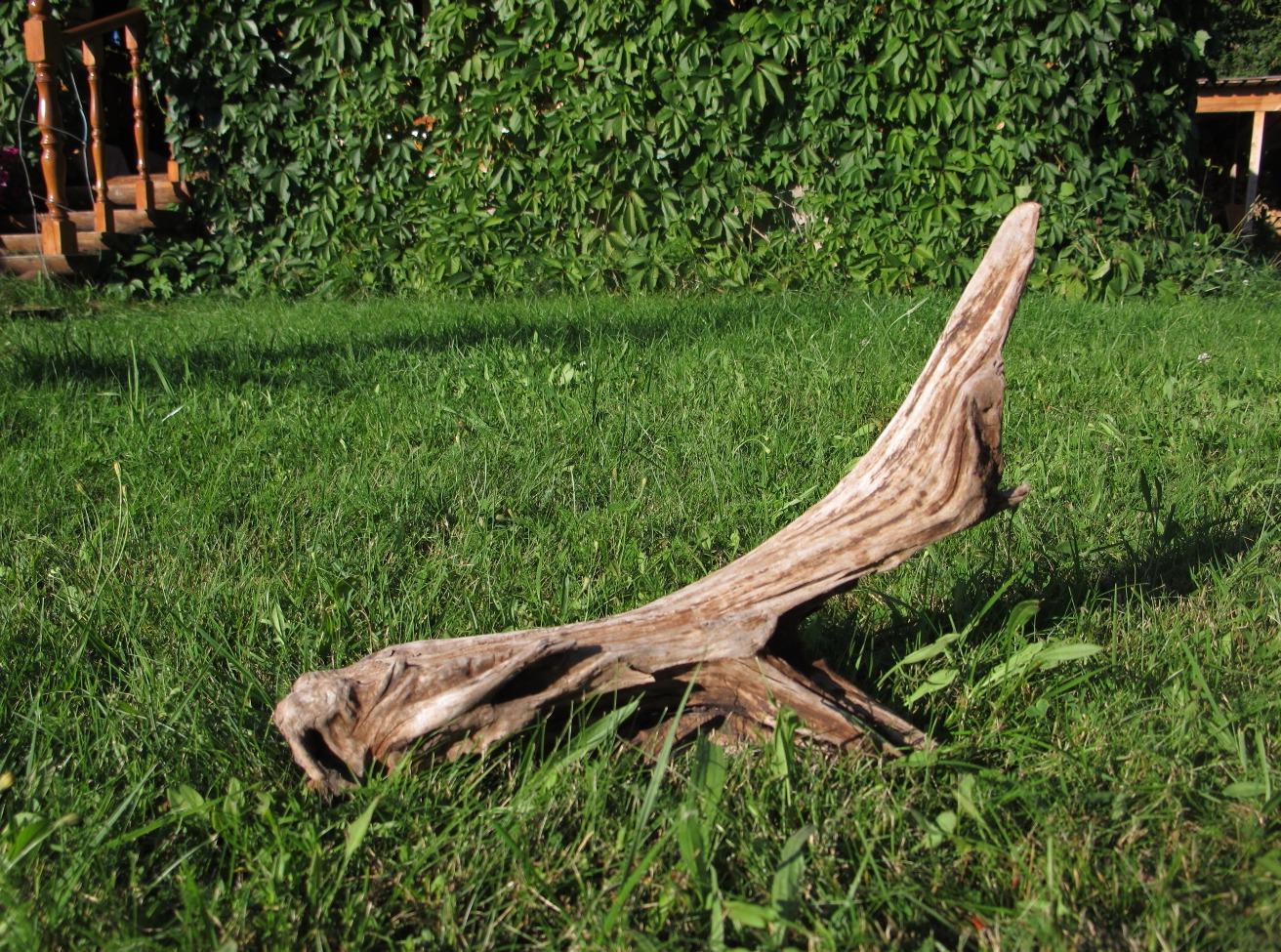 Необычная коряга в саду