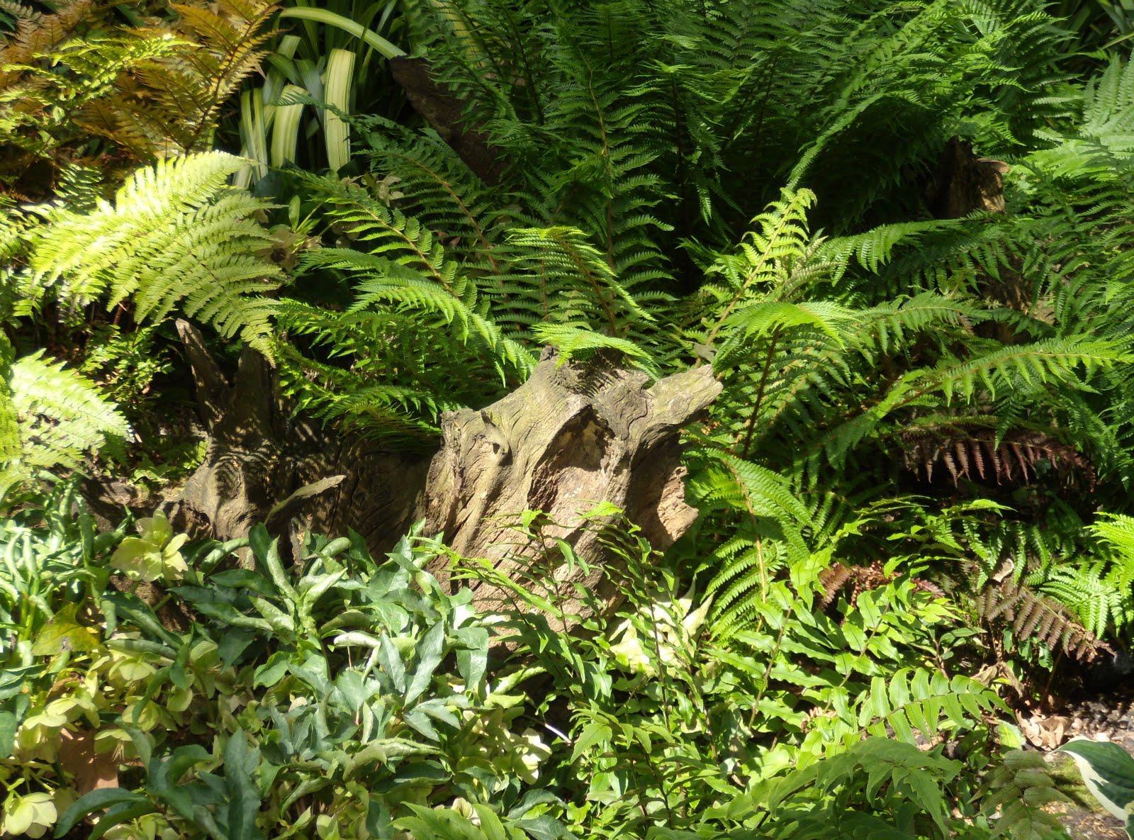Рутарий и папоротники в саду