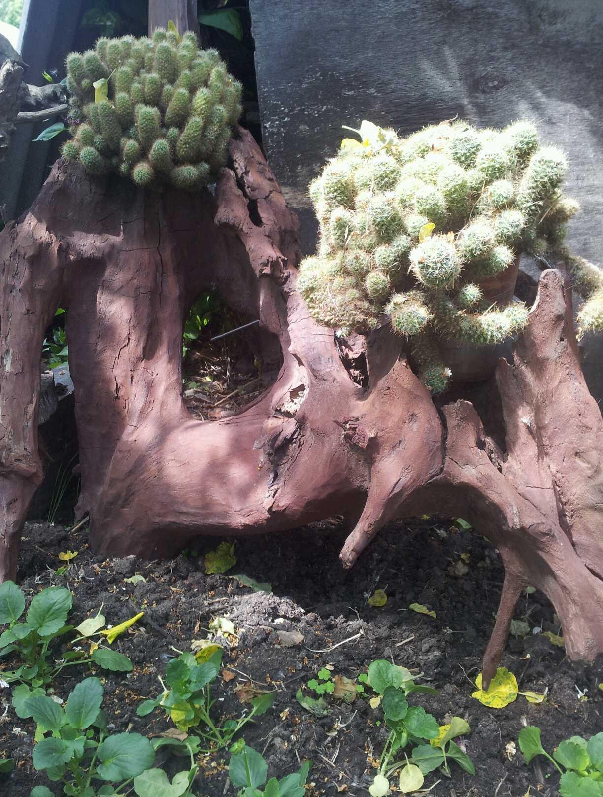 Коряги и кактусы для украшения ландшафта