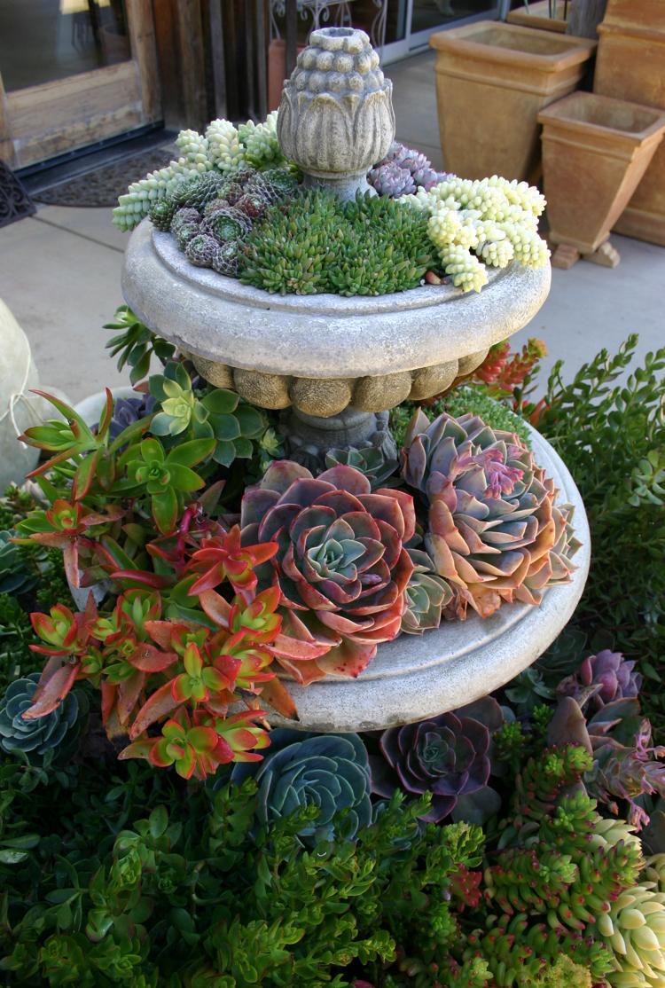 Суккуленты в садовом фонтане