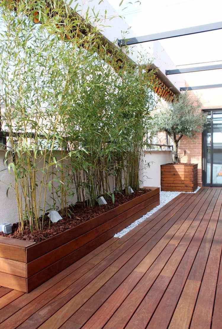 Бамбук в саду дома