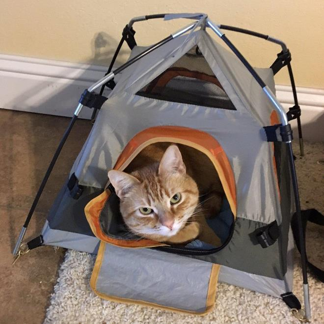 Палатка для кошки