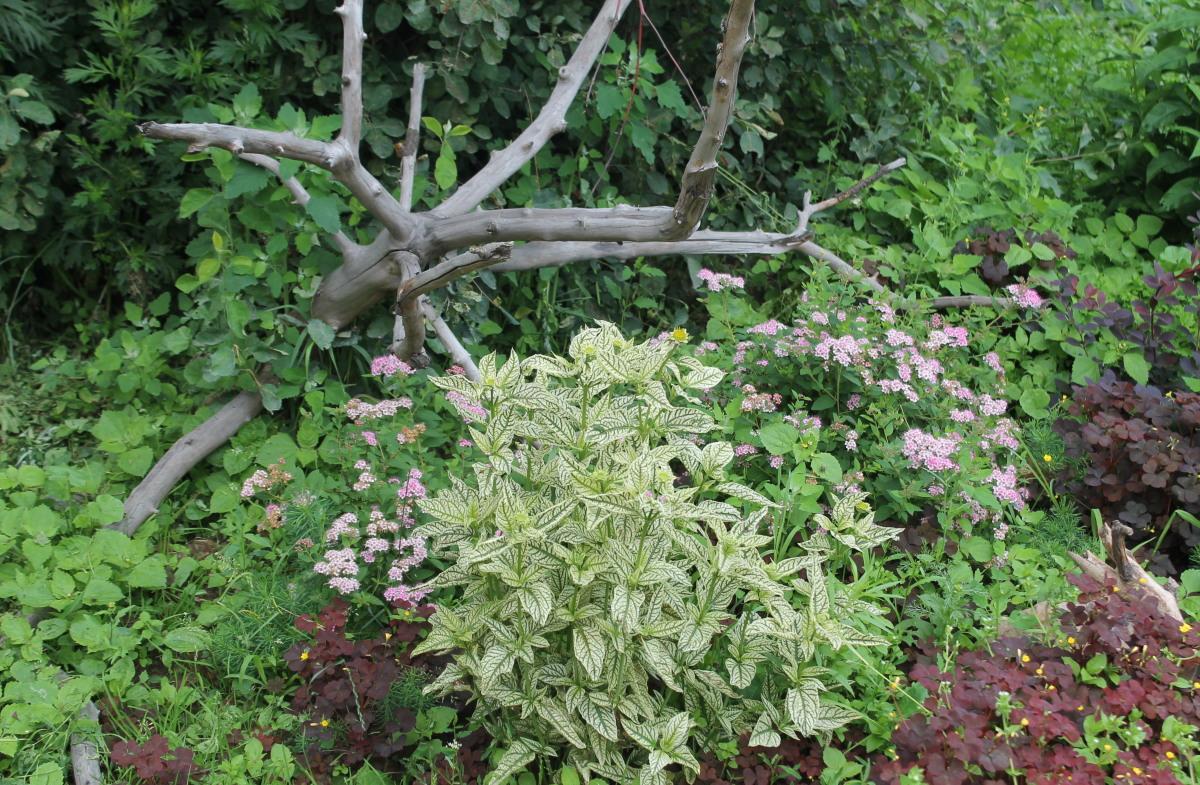 Большая коряга и цветы в саду