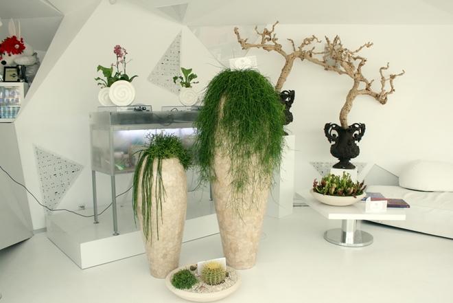 Экзотические и необычные растения в интерьере и уход за ними