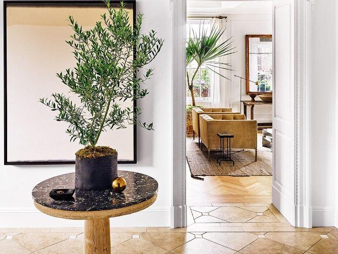 Неприхотливые комнатные цветы для дома