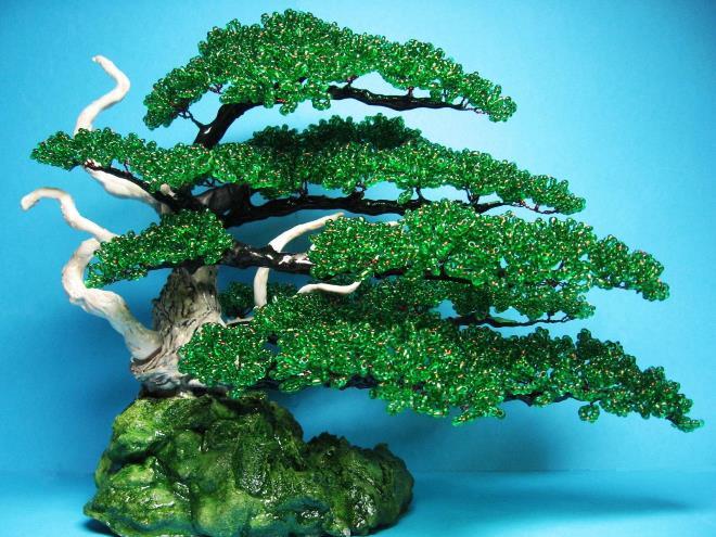 Японское дерево или вечнозеленый бонсай