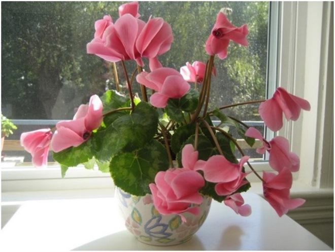 Цветы для спальни