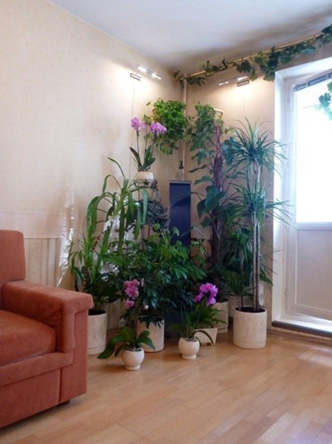 Угловые варианты размещения комнатных растений