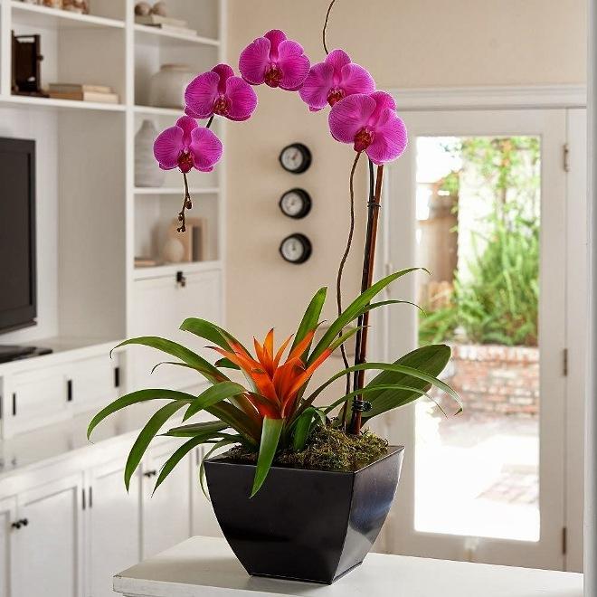 Виды орхидей, их названия и фото, описание и содержание в домашних условиях