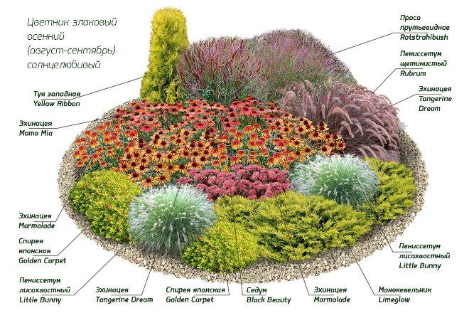 Размер палисадника, планировка и схема рассадки растений