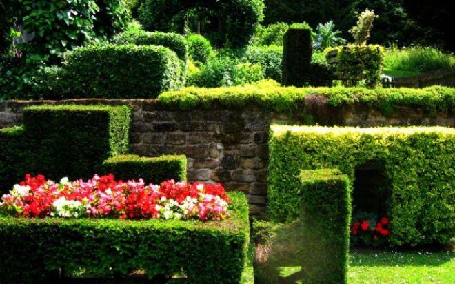 Живые заборчики для клумб из растений