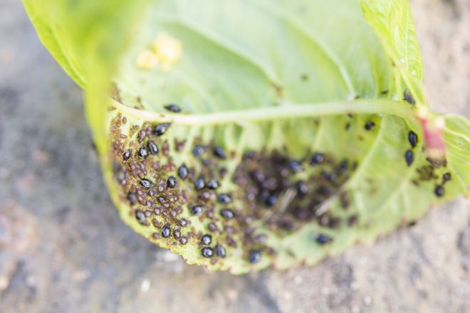Борьба с вредителями и профилактика заболеваний