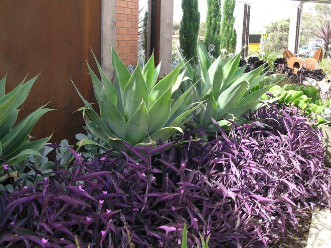 Основные характеристики традесканции садовой