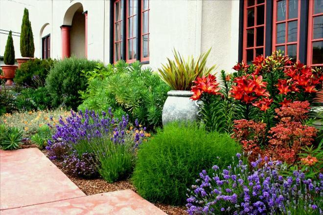 Соседство с другими цветами