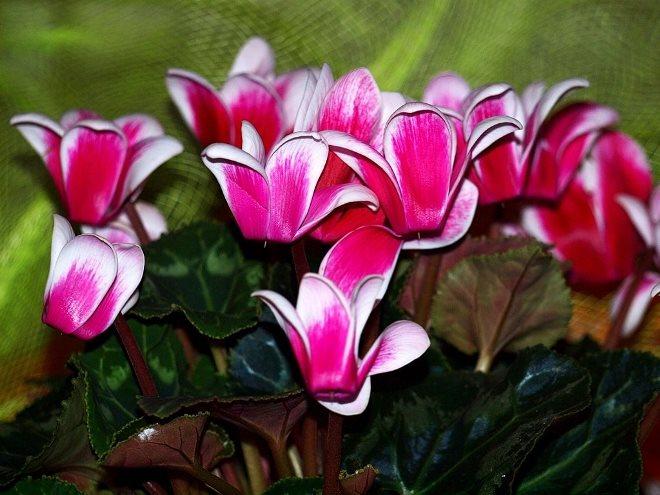 Другие цветы для флорариума