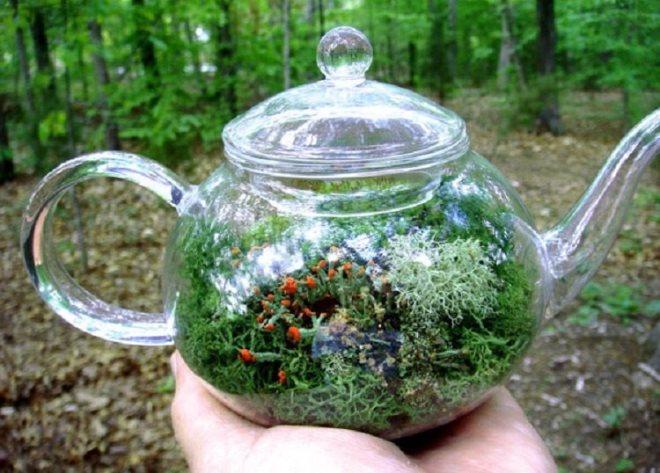 Флорариум чайник