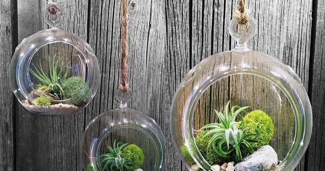 Подвесные флорариумы