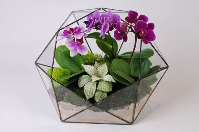 Виды флорариумов