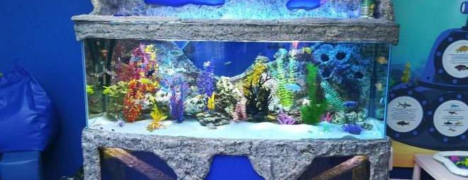 dekor_akvariuma